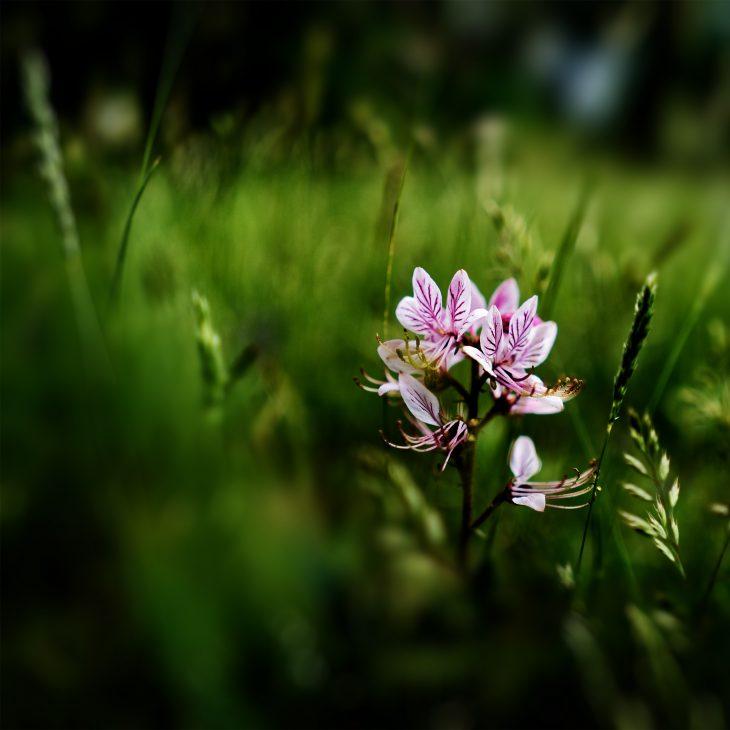 fiore macro flower