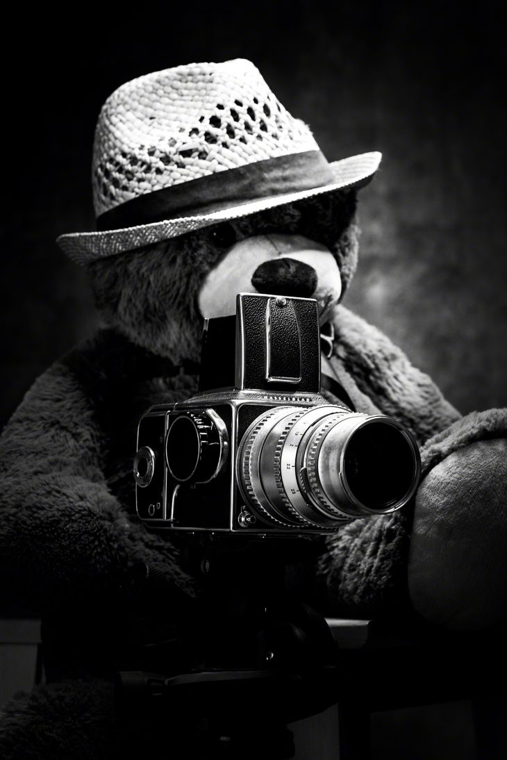 teddy in the mood of film & hasselblad shooting